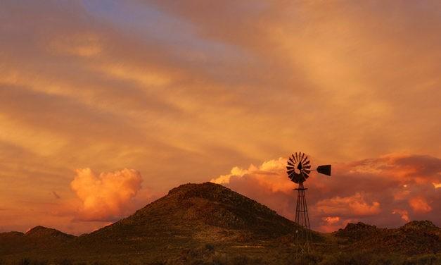 Groot aroma jenewer uit die Groot Karoo